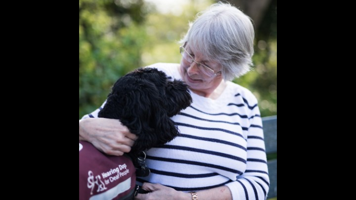 My  Beloved Super Hearing Dog - Clay