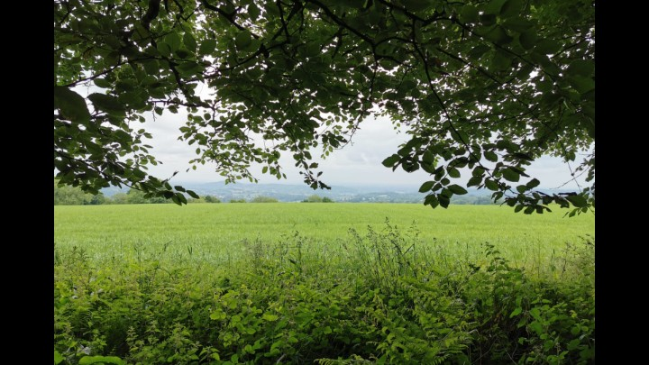 The Beauty Of Bromyard Downs